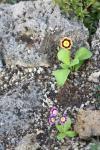 02 - 19.06 - unmittelbar nach der Pflanzung